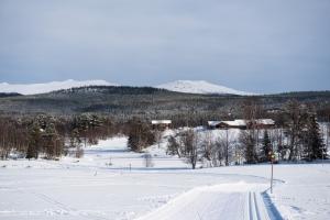 Vinter anåfjällen